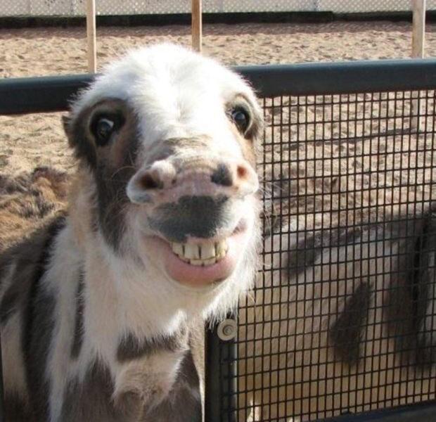 A happy horse
